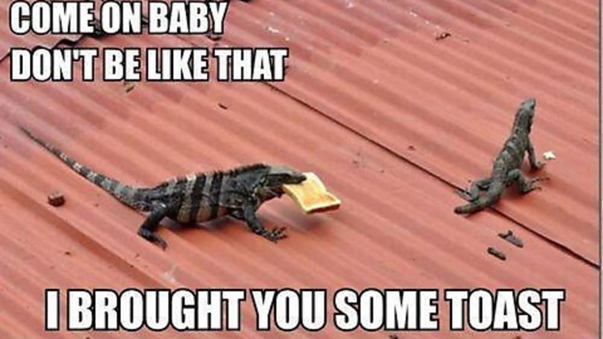 All iguana do is make love to you. - meme