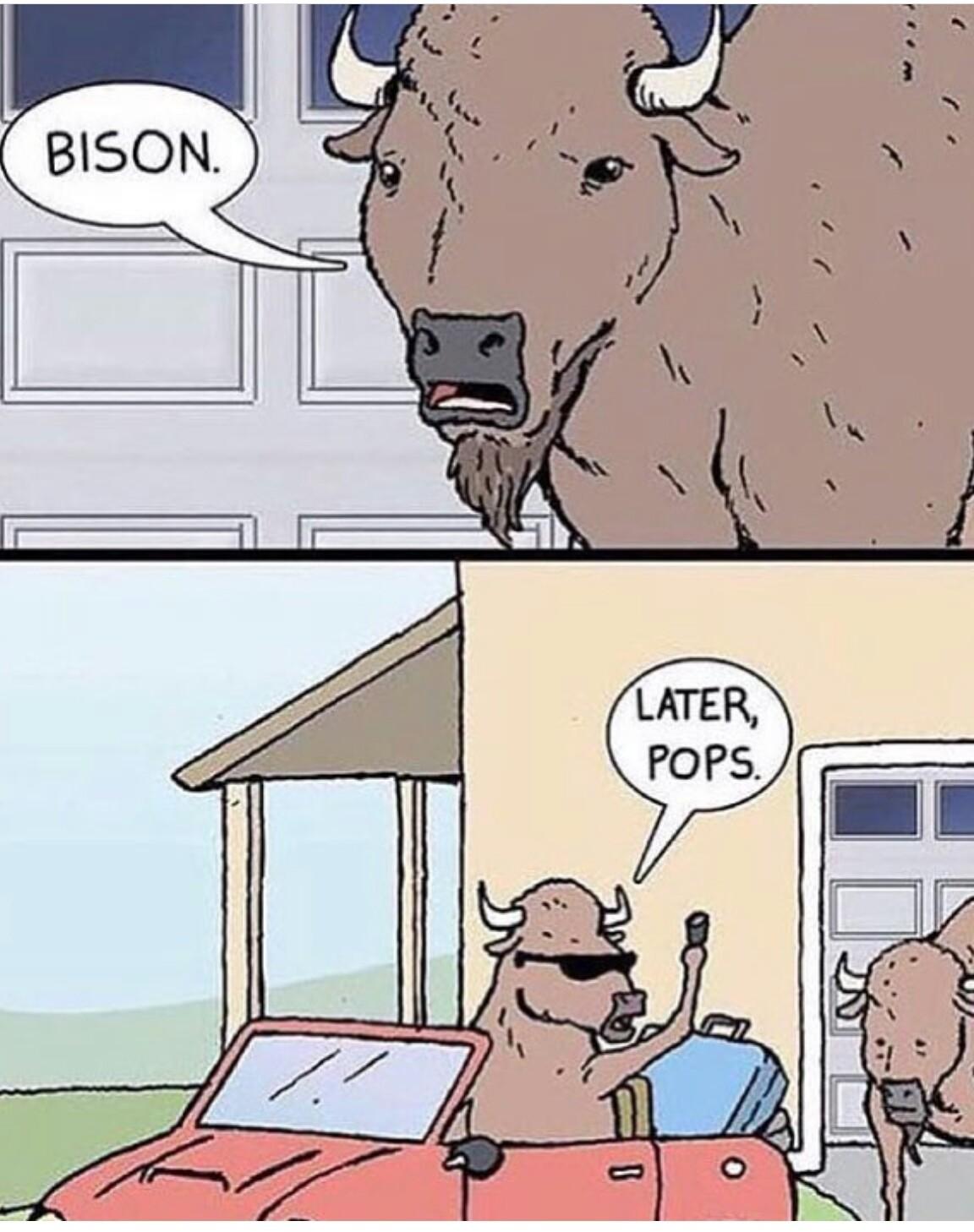 Bison - meme