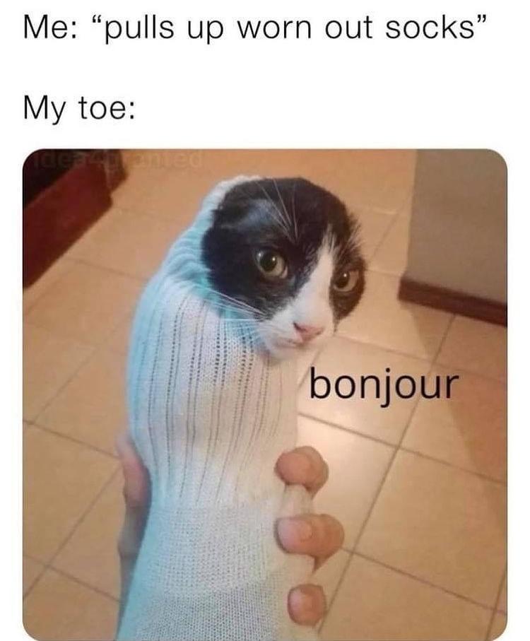 my toe is cat - meme