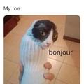 my toe is cat