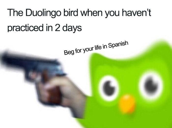 Duolingo again - meme