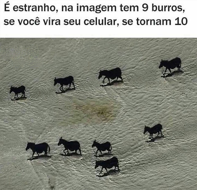 qm conseguiu achar o décimo burro? - meme