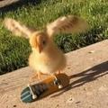Kickflip chicken