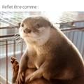 Les loutres c'est presque mieux que les chats pour faire des memes