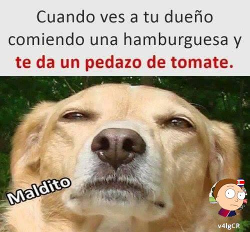Mardito! - meme