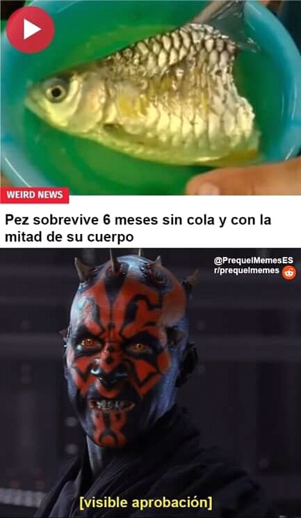 Maul sabeee - meme
