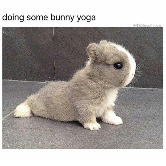 Bunny - meme