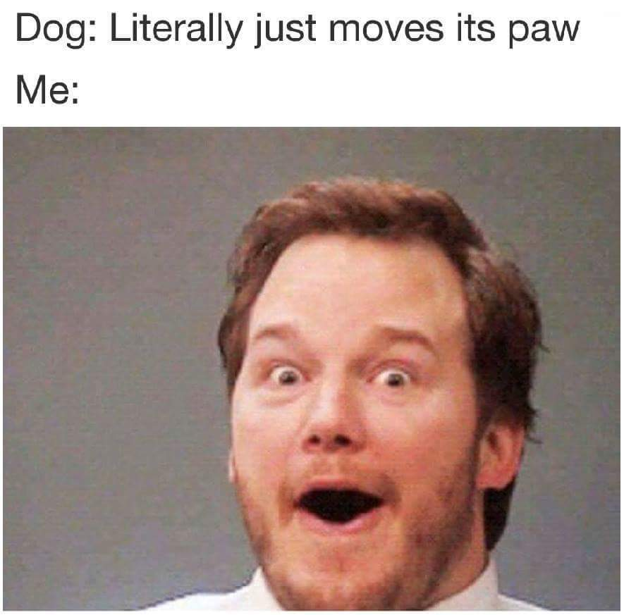 Chris Pratt visits a dog - meme