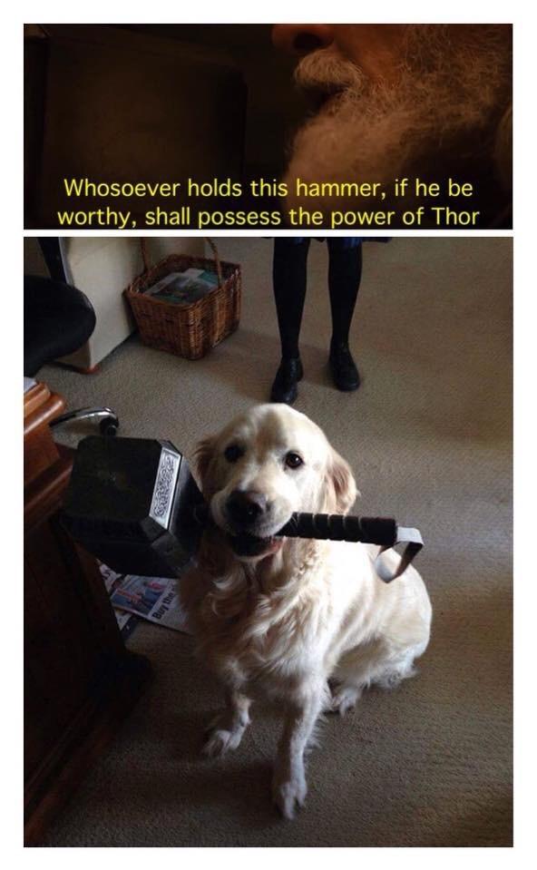Worthy doge - meme