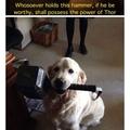Worthy doge