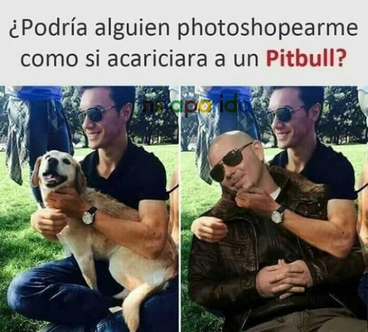 C pitbull - meme