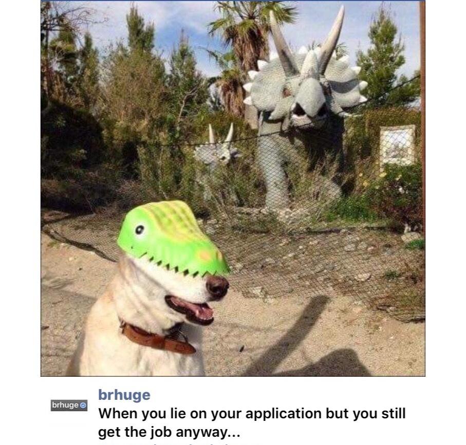 jurassic bark - meme