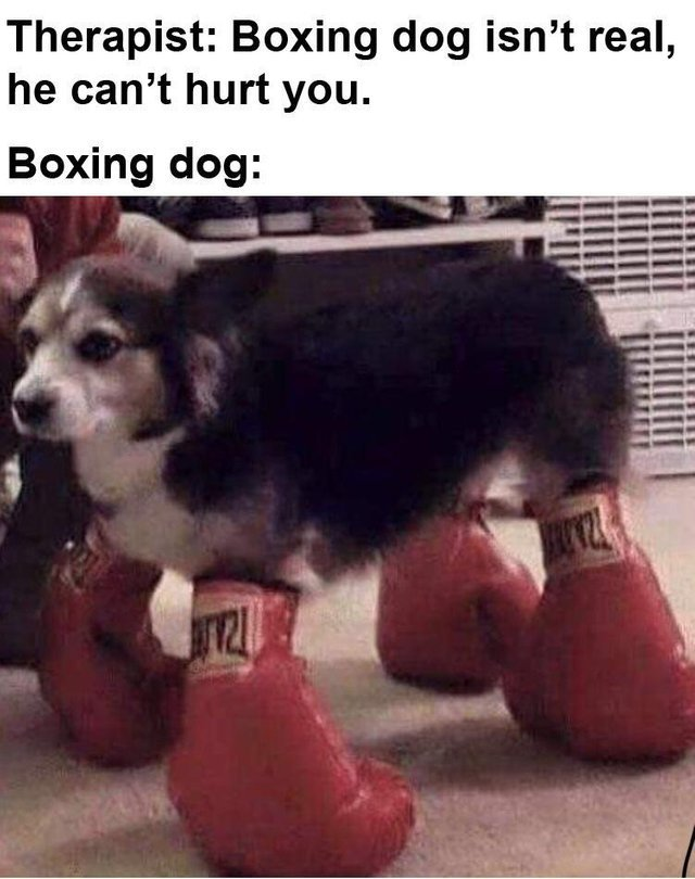 Boxing dog isn't real, he can't hurt you - meme