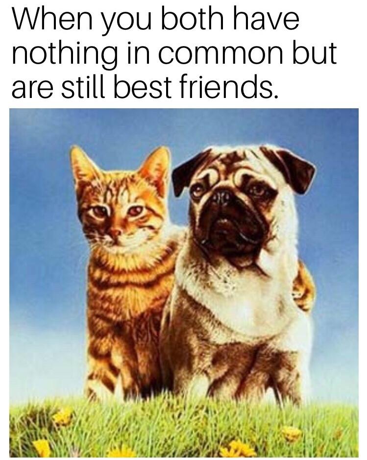bffer - meme