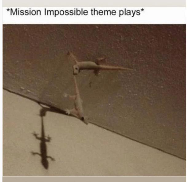 ceiling - meme