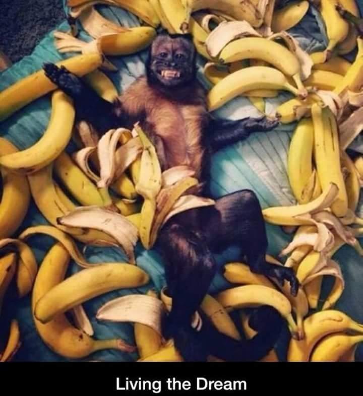 Les bananes c'est la vie - meme