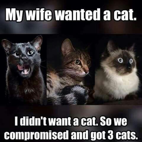 Cats ~ - meme