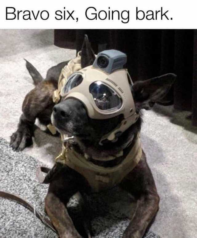 Modern Warfare Doggo - meme