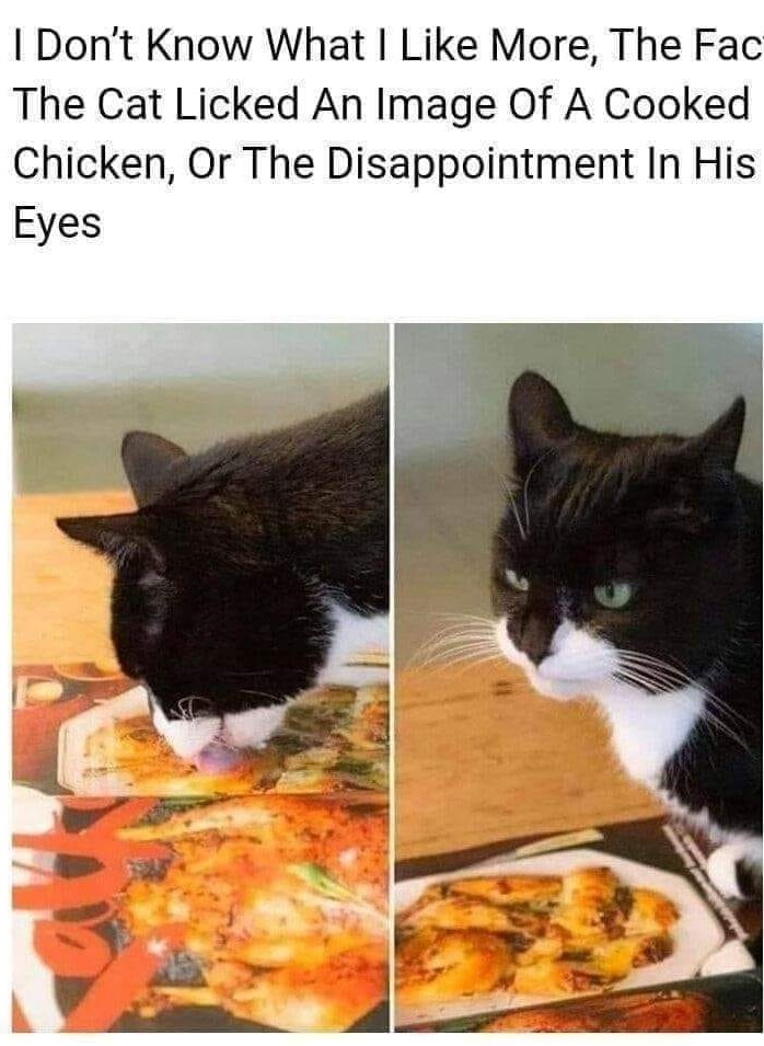 Cat gets dissapointed xD - meme