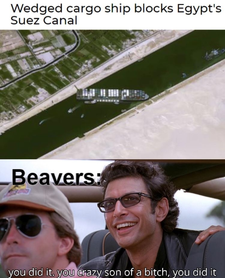 point to the beavers - meme