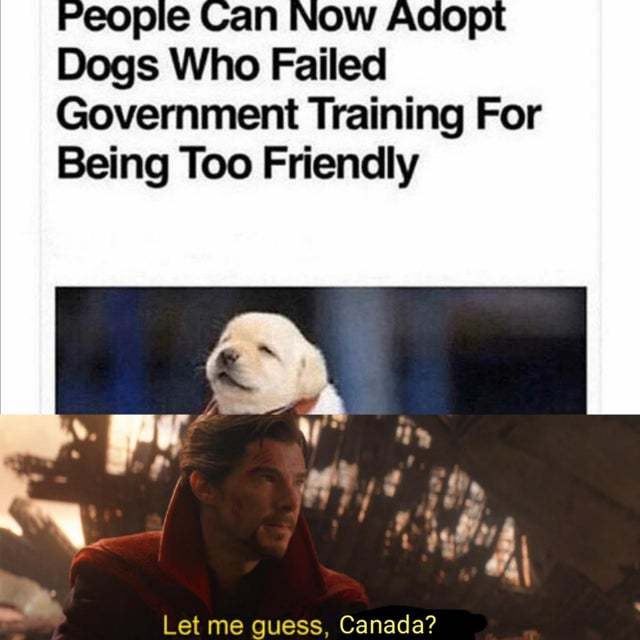People can now adopt dogs who failed government training for being too friendly - meme