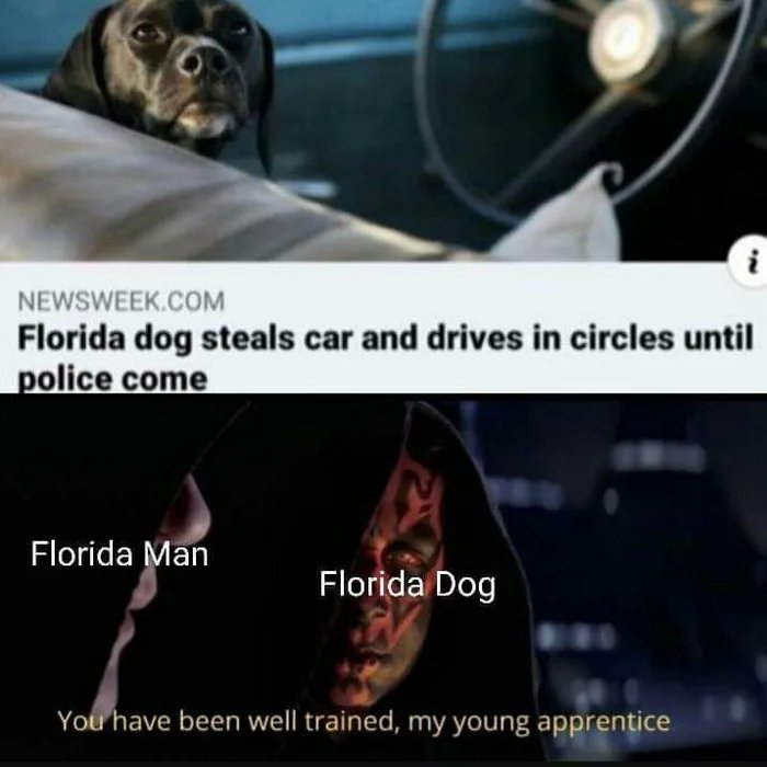 The tragedy of the good Boi - meme