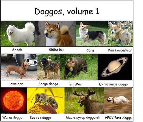 Love doggos - meme