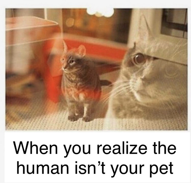 When you realize the human isn't your pet - meme