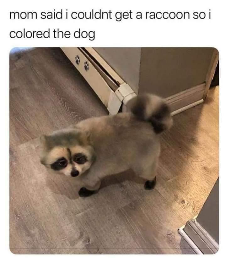 Racoons dog - meme
