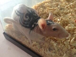 IMPONENTE -Raul no enseña su rata tatuada - meme