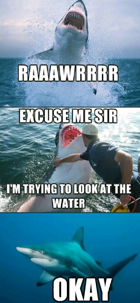 Inconsiderate shark is inconsiderate