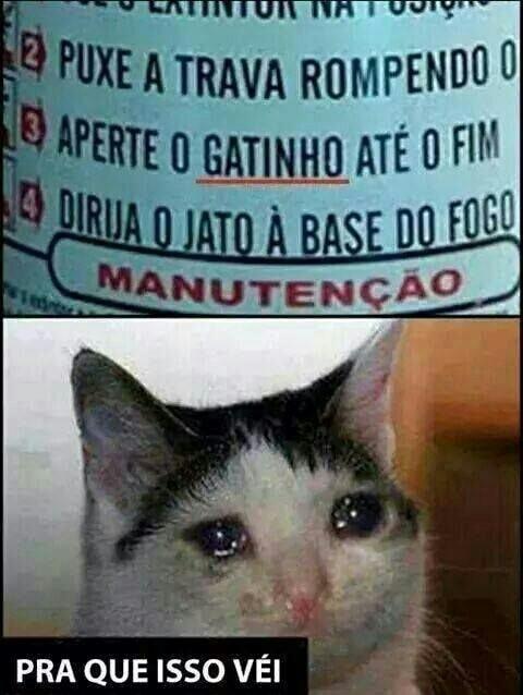Ibama - meme