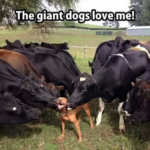 big dogs - meme
