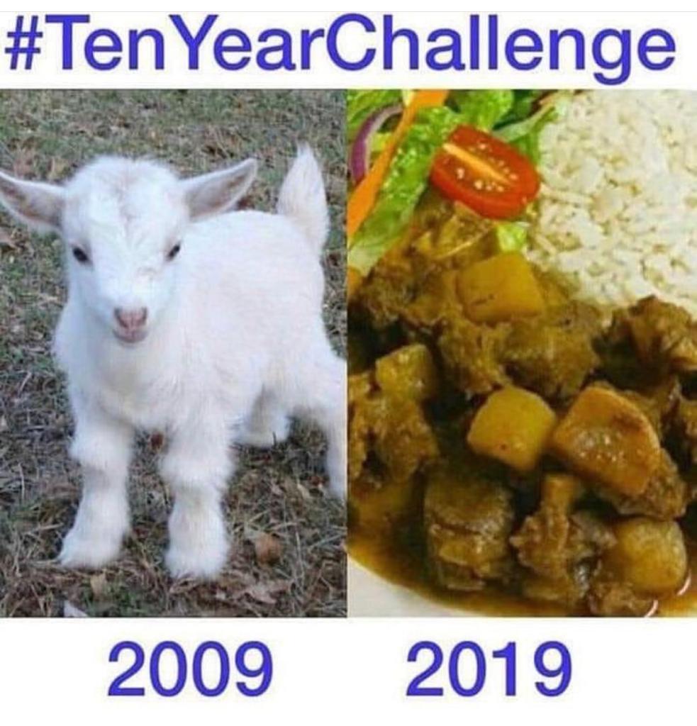10 anos ovelha - meme