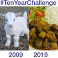 10 anos ovelha