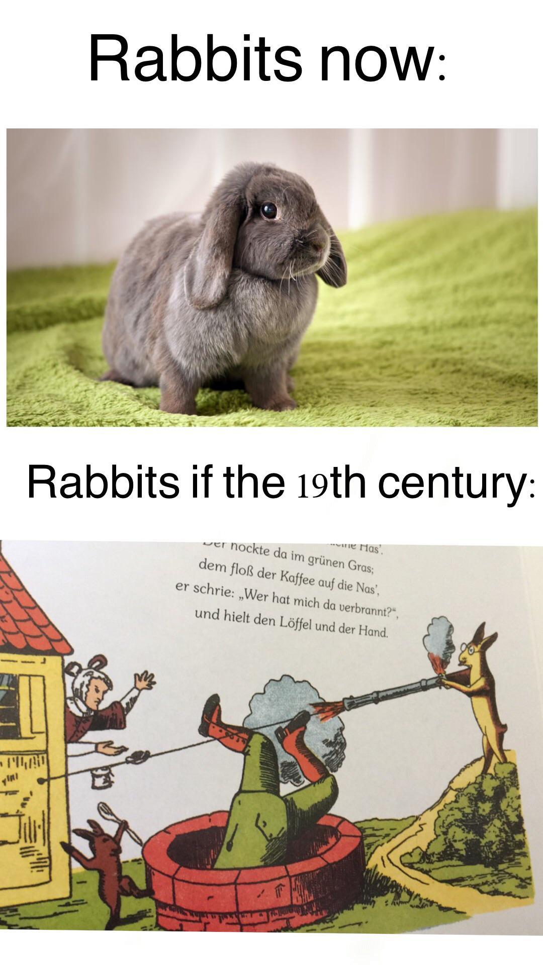Old ass rabbits are real G's - meme