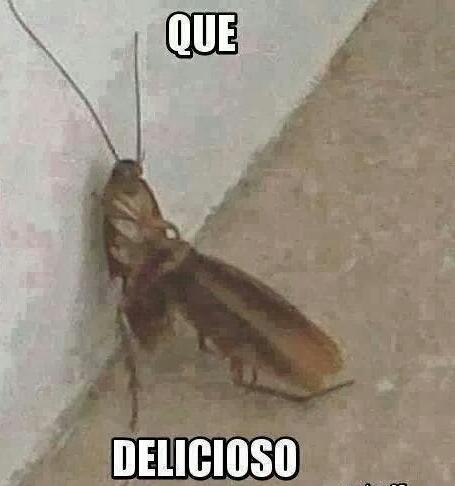 Cucarachas!!! - meme