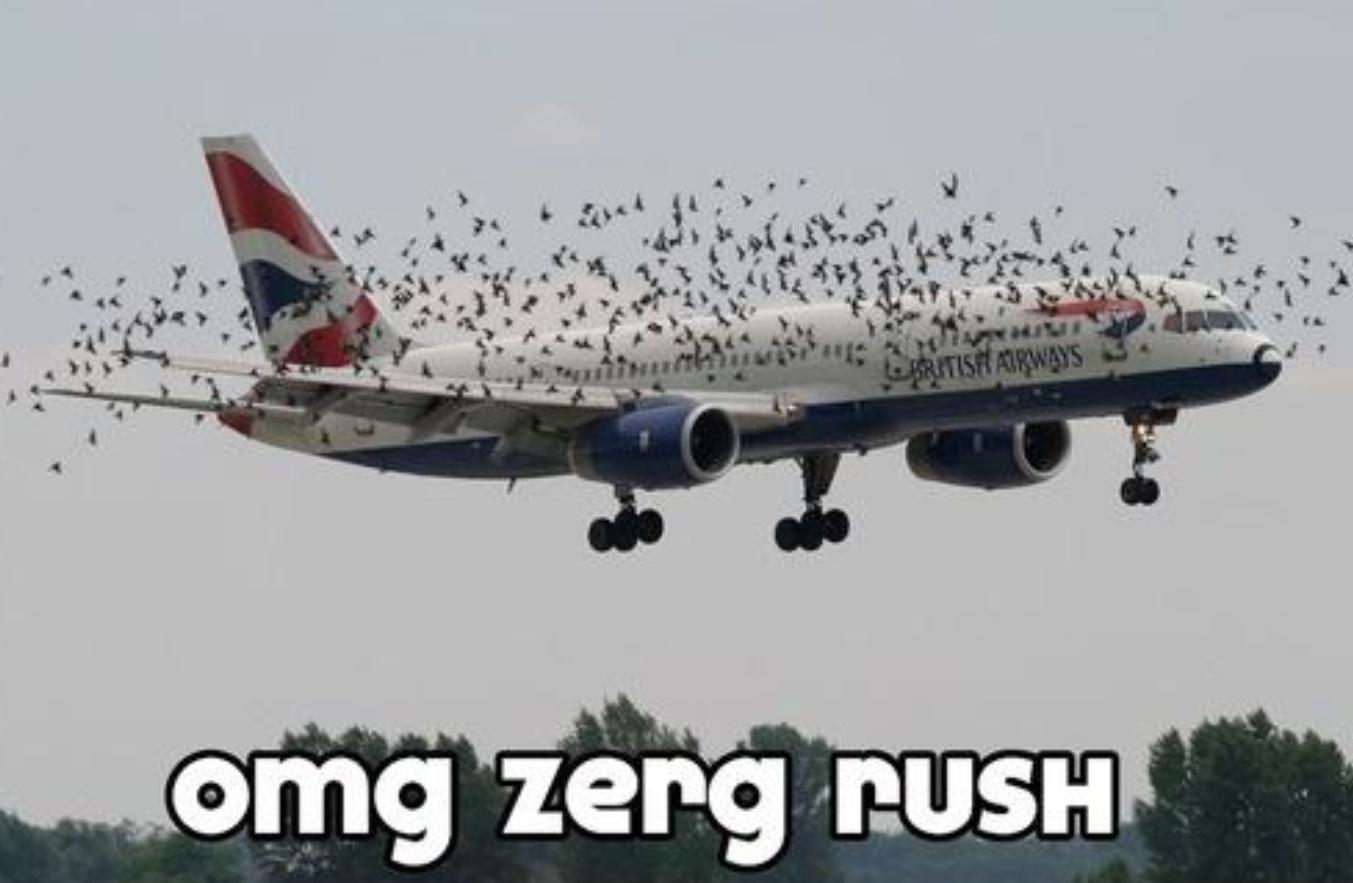 ZERG RUSH - meme