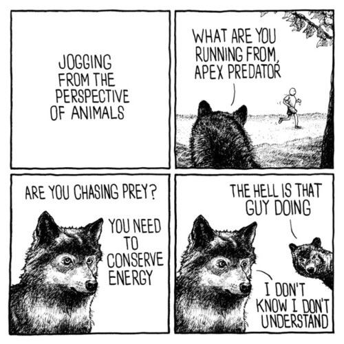 such a perplexing apex predator.....why you do these things? - meme