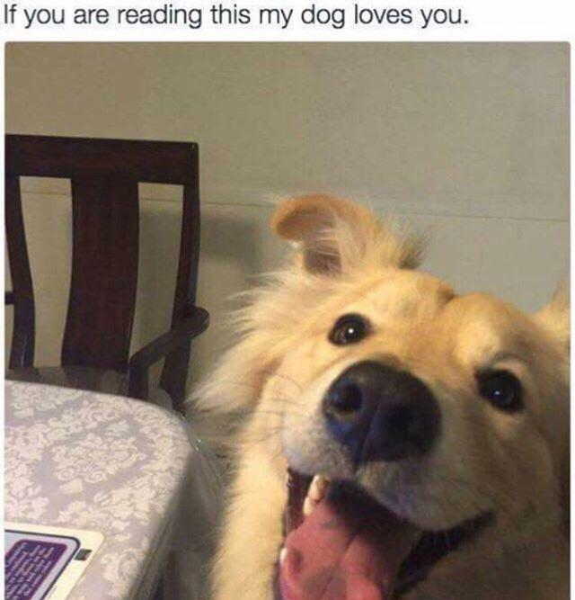 such a good boy - meme