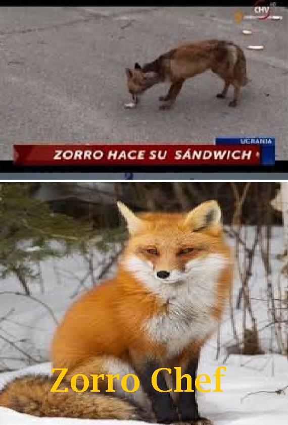 Chef - meme