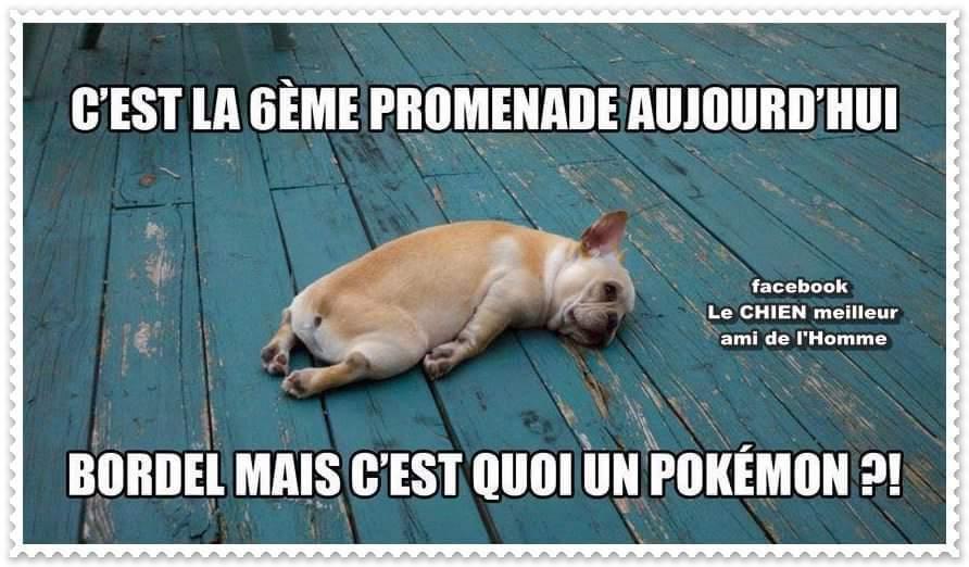 Dur vie pour les chiens... >:) - meme