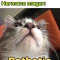 Mi gato uwu