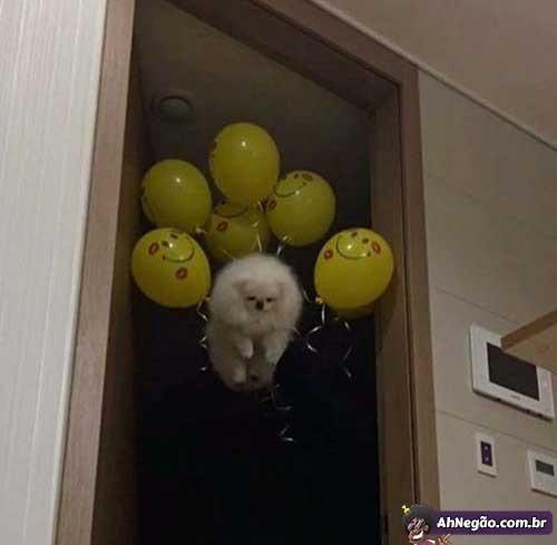 Dogos Dumont - meme