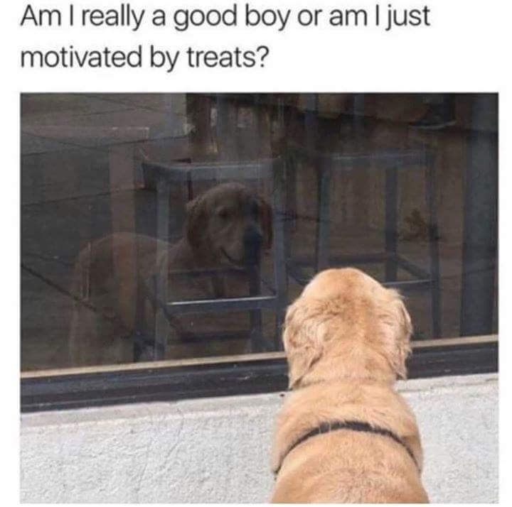 Mid Life Crisis - meme