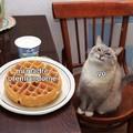 El gato es adorableee