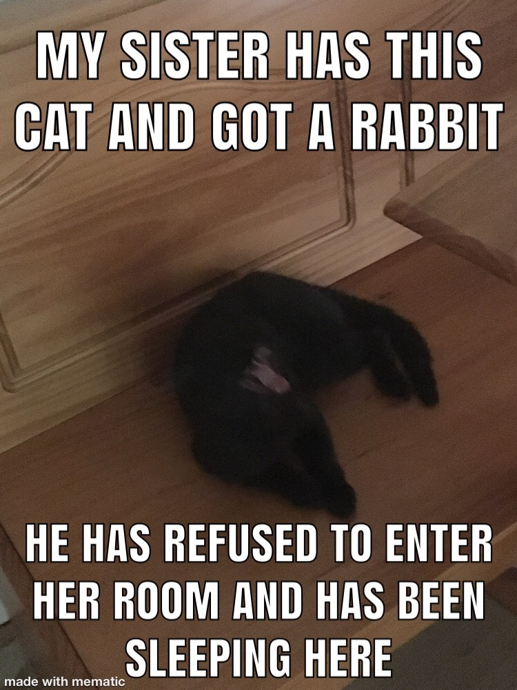 he actually started crawling under her door and pulling his bowl out with him - meme