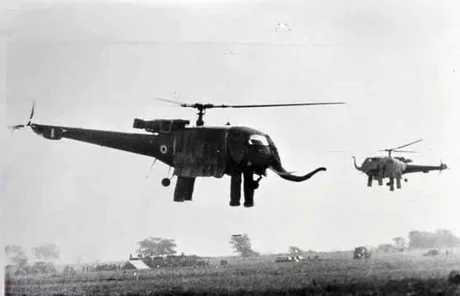 Here's some Elephant Helicopter in their habitat, it'll help you relax from political meme