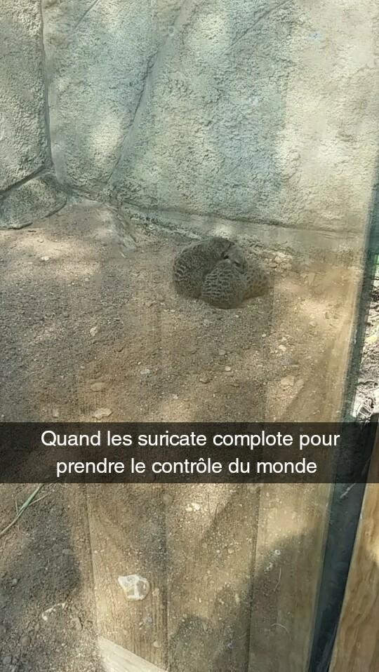 C'est la merde ! - meme