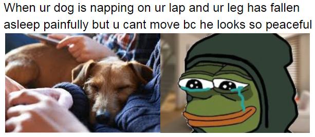ah pups - meme